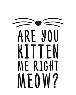 Are you kitten me right now
