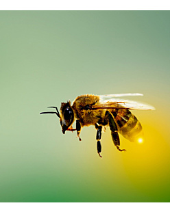 Honey Bee - Maseczka Sublimacyjna