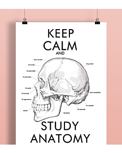 Keep Calm and Study Anatomy Plakat Biały A2